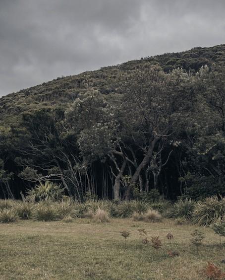 trees-cropped.jpg